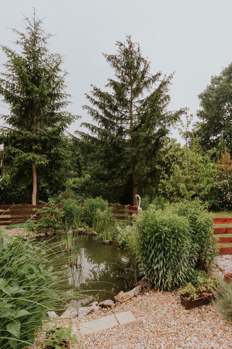 Fotózás helyszín Debrecen - Csereerdő